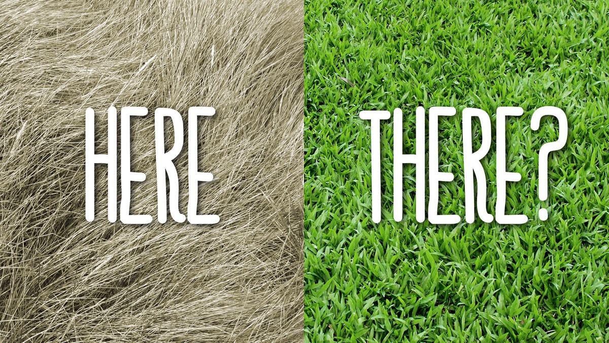 Grass is always greener on other side - Dr. Vidya Hattangadi